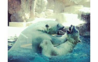 『日本平動物園』の画像