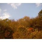 『秋の減少』の画像