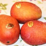 『国東の食環境(341)マンゴ』の画像