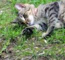 2月22日は「猫の日」 沖縄タイムスの猫の日ベストショット10選