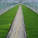 『草刈り&畦塗り、田植えまであと1週間です』の画像