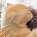 【ネコ】 少年が道端の水たまりで遊んでいた。あなたが好きでたまらにゃい♪ → 猫はずっとこうします…