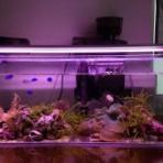 アクアリウム★海水魚と暮らす