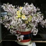 『春。』の画像