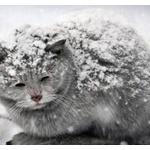 野良猫に暖を取る方法ないか?寒そうにしてるから何かしてやりたい。