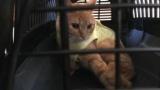 手術後のネコ、ちょっとかわいい(※画像あり)