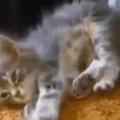 小さな子ネコが寝転んだ。可愛いので頭を撫でてみる → こうなった…