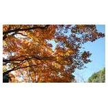 『【ながさき】秋の紅葉は見ごろでした』の画像