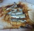 【悲報】ワイ、釣ったサッパを焼くも寄生虫が怖くて食欲が湧かない
