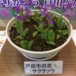 『戸田市役所2階で戸田市の花・サクラソウと戸田ヶ原自然再生エリアの紹介をしています』の画像