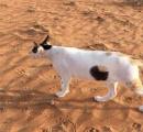 【画像】体に穴の空いた猫が発見される
