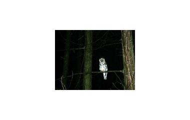 『静かに見つめる』の画像