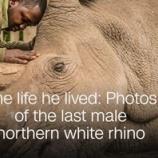 『スーダンの最後の雄姿』の画像