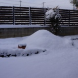 『雪におおわれるDIY庭』の画像