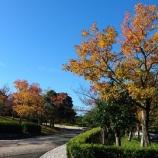 『小さい秋発見!!ゴルフ!!』の画像