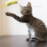 『【真実】猫じゃらしならぬ「人じゃらし」が人間の本能を表していると話題に!やっぱりみんな◯◯が好きなんだなぁwwwwwww』の画像