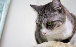 """""""オモシロかわいい""""猫のしぐさ"""