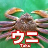 『🦀「ウニ」Tako ←すき』の画像
