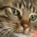 ネコの前足に手を乗せてみた。素早く乗せ返してくる → 何度もやっていたらこうなった…