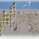 『フォト短歌「白鳥米」』の画像