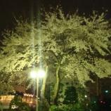 『ボク的桜の新スポット』の画像