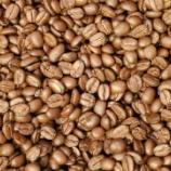 『《種まき便:珈琲豆の紹介》光の種』の画像