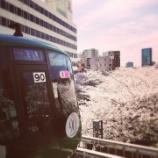 『【季節限定版】桜〜東京穴場7選  vol.2521』の画像