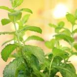 『かゆくて赤いプックリができたら緑茶+ミントを♪』の画像