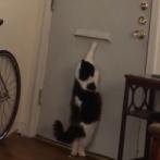 怪しい気配...ここは私にまかせて!郵便配達員の気配を感じると、ドアの郵便受けから鉄壁の防御&攻撃をする番猫
