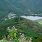 山の花・里の花に心癒されて