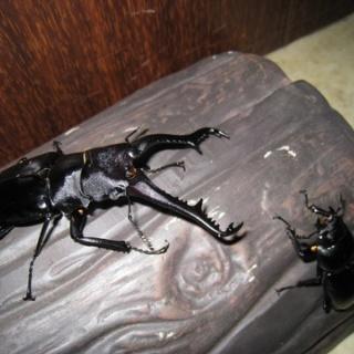 昆虫ショップGHOST(ゴースト)
