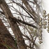『リスとの出遭い』の画像
