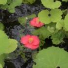 『花残月 5 散り椿』の画像