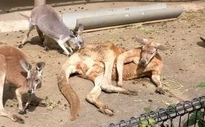 1歳の息子と回った多摩動物公園
