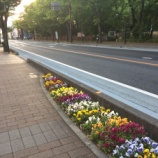 『戸田市役所南側・市役所南通りの花壇を手入れしているのは・・・』の画像