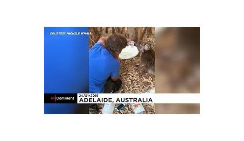 オーストラリアの異常な熱波が話題に 現地から嘆きの声が続々