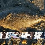 『DUOルアー ヒラメ  と 鳥を釣った話』の画像