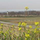 『春はすぐそこまで来ています』の画像