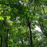 『森に棲む』の画像