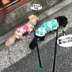 メルロコ一家の横須賀ストーリー