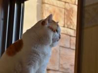 金澤朋子(kntm)のデブ猫について情報・画像たのむ