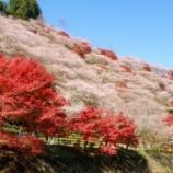 『【乃木坂46】美しい・・・さくらと楓のコントラストが見事すぎる!!!!!!』の画像