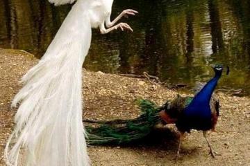 【生物】幻想的!アルビノの世界
