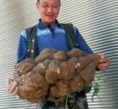 重さ27キログラムの超巨大サツマイモ収穫(画像あり)