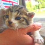 『スリッパ猫の正体』の画像