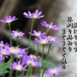 『草刈り終わる』の画像