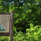 『苗場山 2.145M』の画像