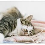【話題】「本当にトトロいたんだ!」思わず叫びたくなる立ち姿の猫の貫禄がスゴイ
