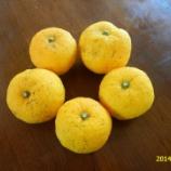 『国東の食環境(7)柚子湯』の画像