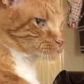 ネコが女の子の前にいた。動かない。一触即発か!? → 猫はこうなる…